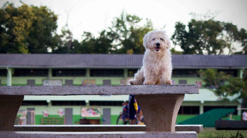 genetsko testiranje pasa