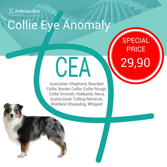 Collie Eye Anomaly DNA Test Special Offer