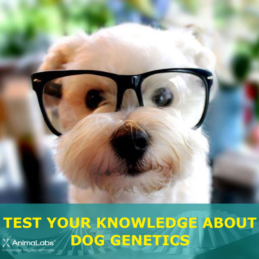AnimaLabs dog genetics quiz