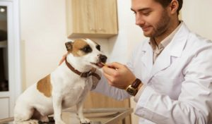 canine herpes treatment