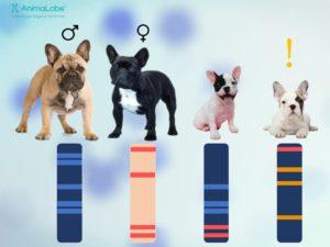DNA profil scheme
