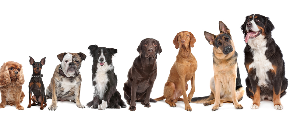 Genetic tests for dogs